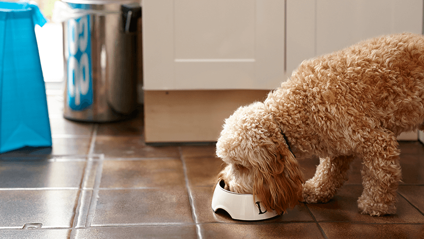 Pet Insurance. Get £20 Co-op food vouchers with a new Pet policy