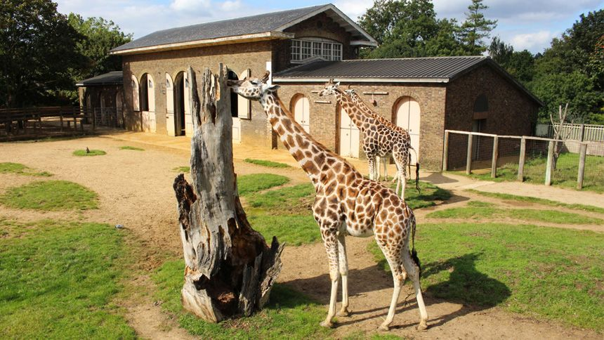 Zoos & Wildlife Parks UK with Hotel. 10% NHS discount