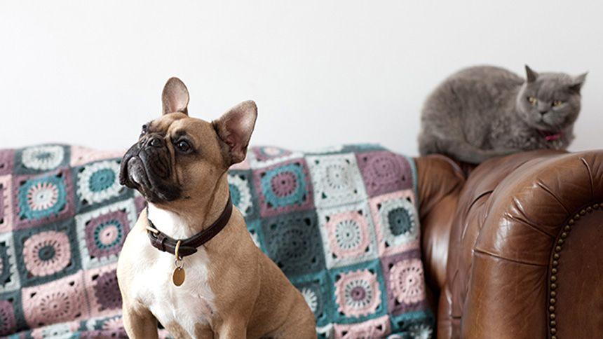 Co-op Pet Insurance - 20% off when you buy online