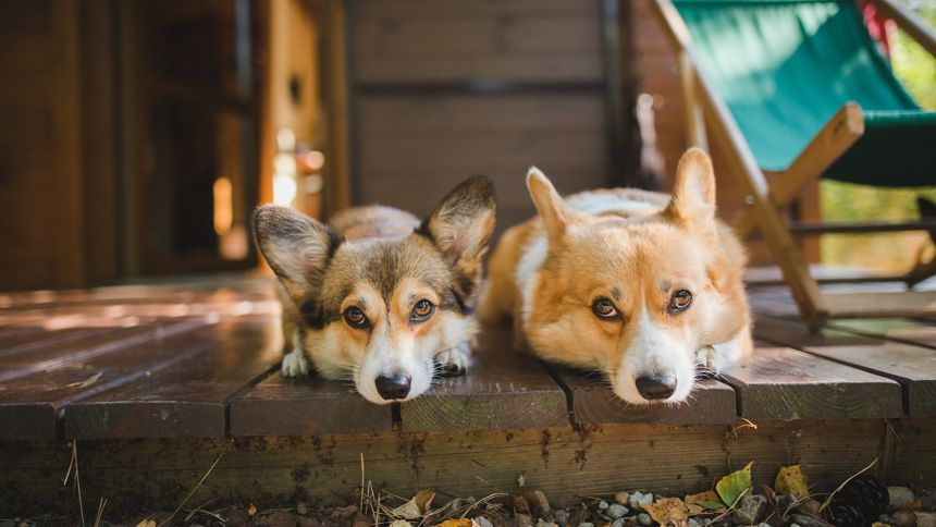 Dog Friendly Holiday Cottages - Exclusive £40 NHS discount